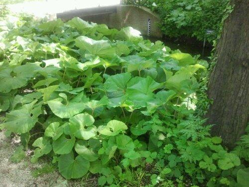Fuki Urban Herbology