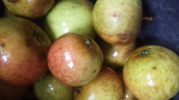 Schellingwoude apples
