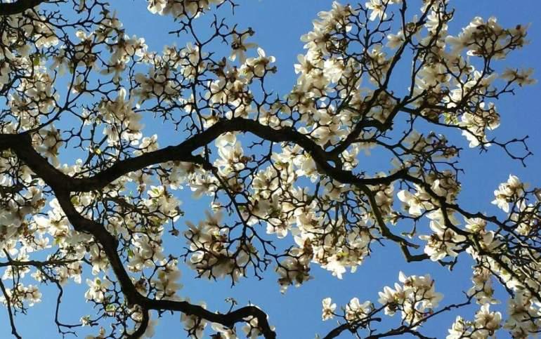 Under the magnolia