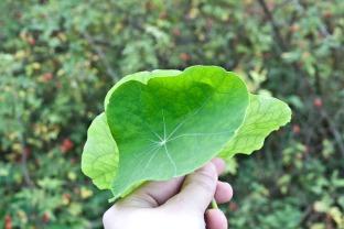 citinerary-amsterdam-herbanherbology_14.jpg