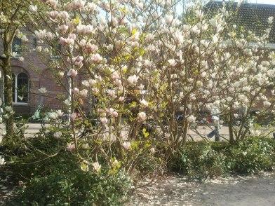 magnolia-westerpark-liberation-day-2013
