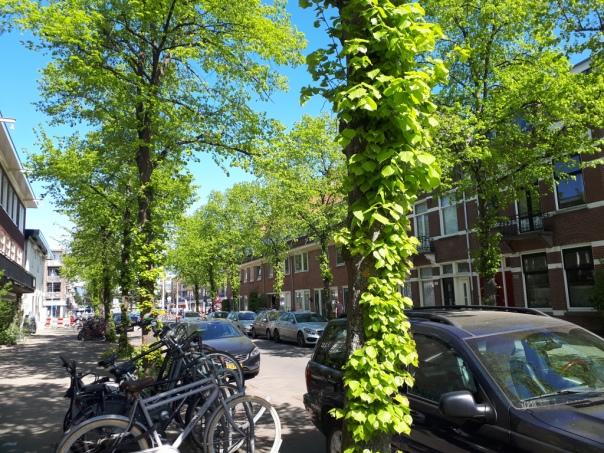 Lime street trees